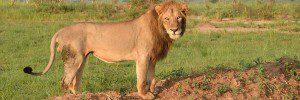 3 Days Murchison Falls National Park