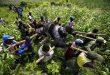 1 Day Gorilla Trekking in Congo Virunga National Park