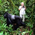 Rwanda Gorilla Tours, Uganda Gorilla safaris, DR Congo Tours  - gorilla trekking in uganda and rwanda by katona tours - Get this Cheap Gorilla Trekking Uganda and Rwanda offer for you