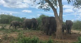 Queen Elizabeth National Park Tour