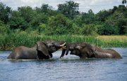 2 Days Murchison Falls National Park Tour - Ziwa Rhino Tracking