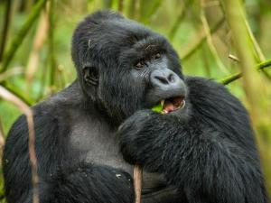 Group Gorilla Trekking Tour