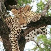 Bwindi Gorilla Trekking and Queen Elizabeth Wild life Tour
