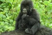 Kwita Izina Rwanda Gorilla Naming 2017