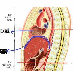 一宮 稲沢 カトウ治療院 整体院 呼吸 横隔膜 心肺 坂道トレーニング 階段トレーニング