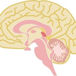 難病の多発性硬化症は神経の異常