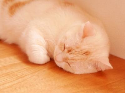 鍼治療による好転反応で眠くなることもある