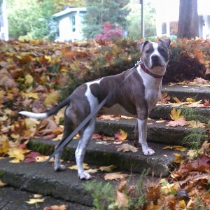 Bella on leafy stairs