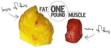 fat-vs-muscle-5719b712c0afbdfb040bc4e5