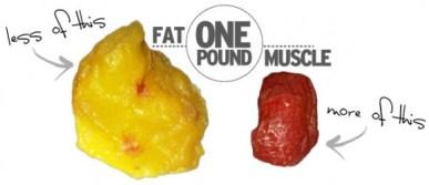 fat-vs-muscle-5719b712c0afbdfb040bc4e5