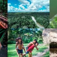 Besuchen Sie den Regenwald, solange es ihn noch gibt