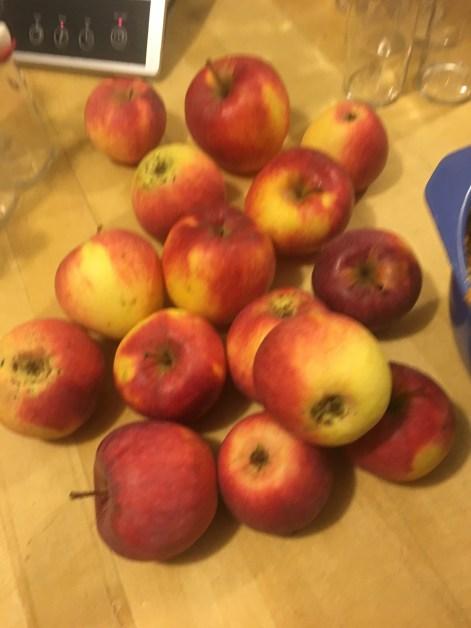 Äpfel, gerade vom Baum