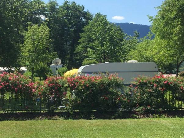 Der Campingplatz ist von Rosenhecken umgeben