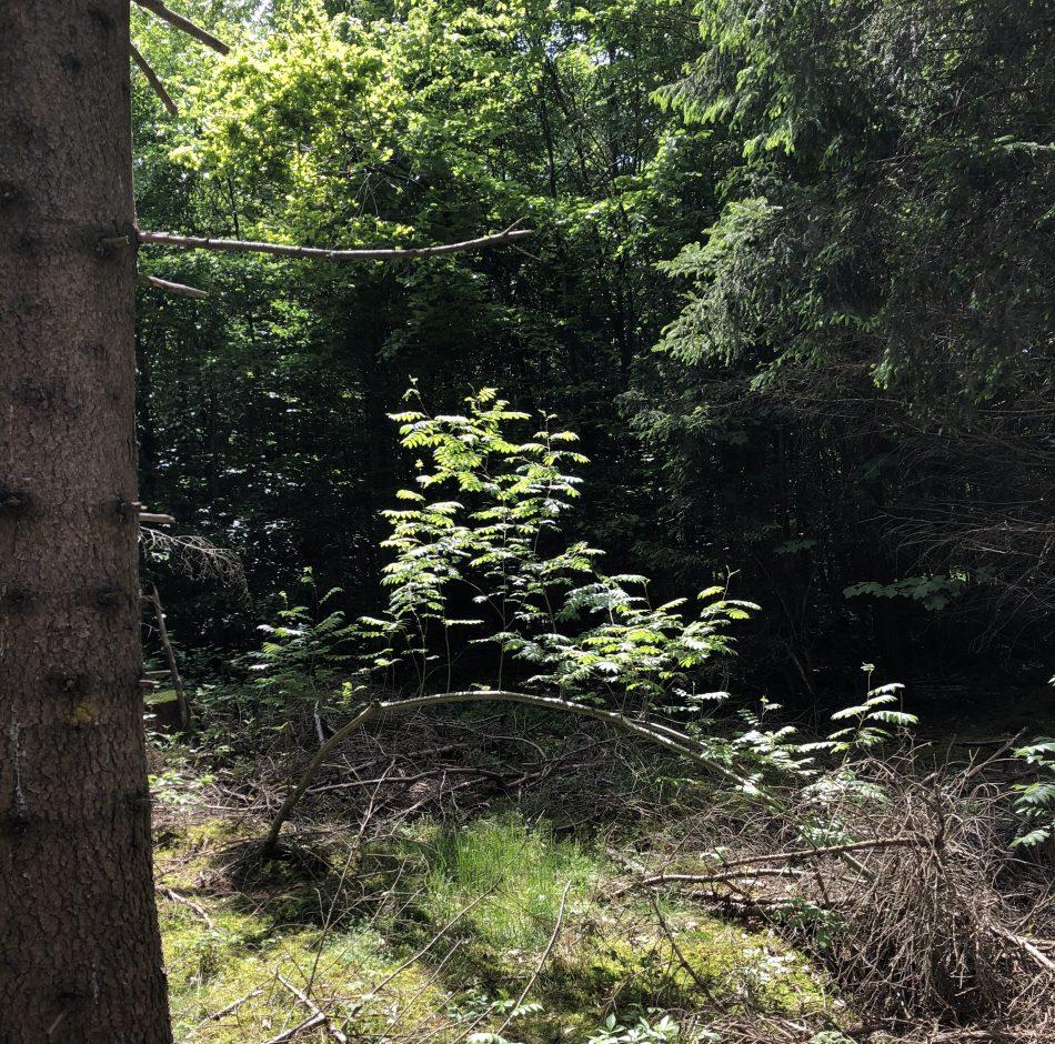 Im Bayerischen Wald ist es auch schön - Waldbaden