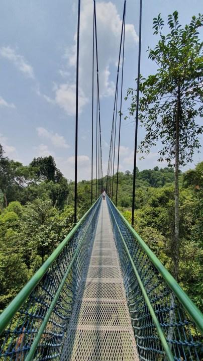 Hängebrücke des Baumwipfelpfads Singapur