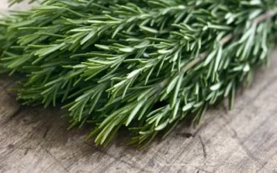 The beauty of rosemary