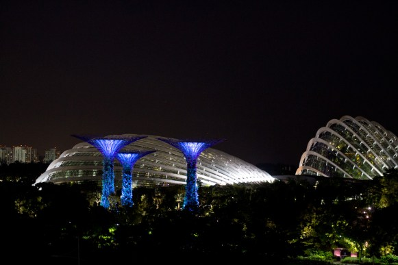 The Superflower Grove cycles through a free light and music show twice each night.