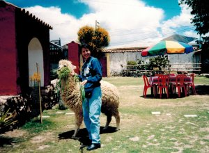 Feeding an alpaca at the restaurant.