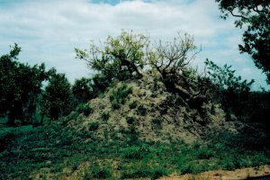safari termite mound