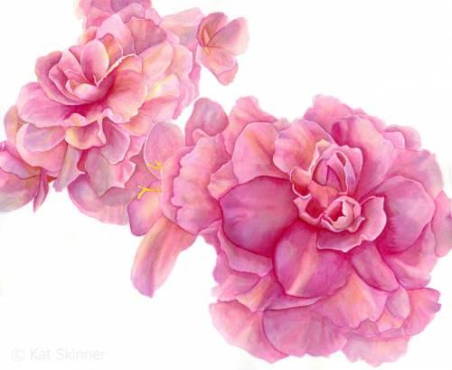Begonia Flowers Watercolor Painting by Kat Skinner