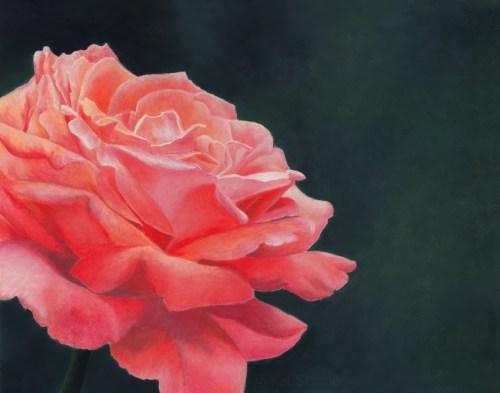 Pastel Pink Rose, Artwork by Kat Skinner