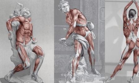 Complete Human Anatomy Thumbnail