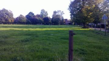Diese Wiese befindet sich neben dem Weg, der sich parallel zur Weser befindet.