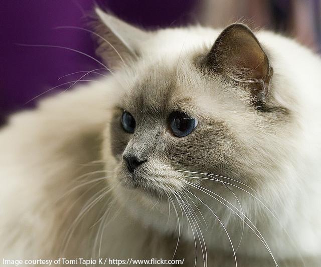 Kattenavn etter utseende