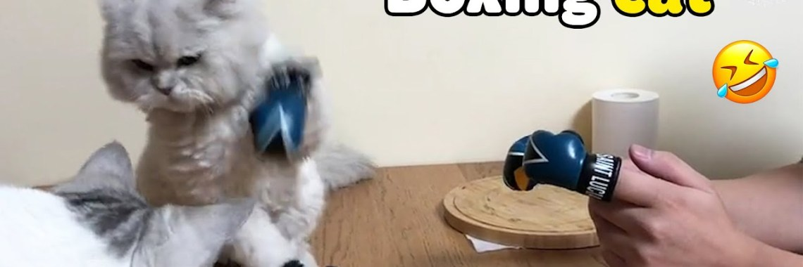 , Boxing Cat Funny And Cute Cats Video Compilation.jpg?resize=1140%2C380&ssl=1
