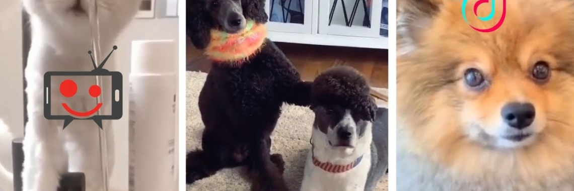 , Funny DOGS amp CATS Compilation BEST FUNNY VIDEOS.jpg?resize=1140%2C380&ssl=1