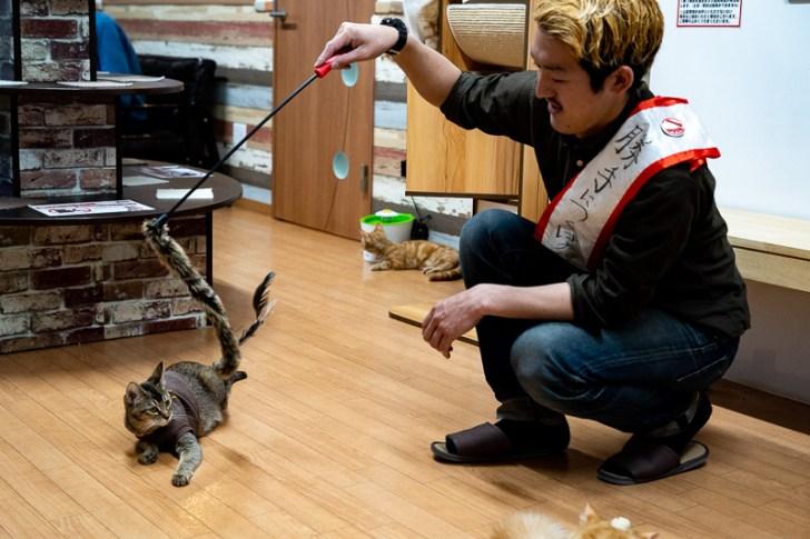 ねこじゃらしで猫様に遊んでもらうニワトリ