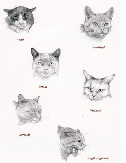 Angst bij Katten in de salon