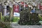 WTT Blossom (1)