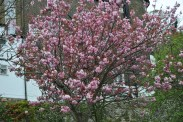 WTT Blossom (5)