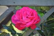 Flower Power (7)