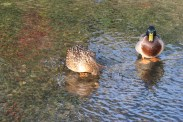 Ducking The Web (2)