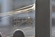 Ducking The Web (7)