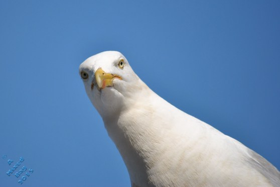 July Birds (1)