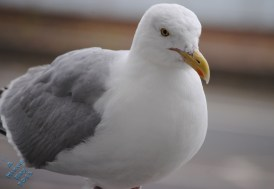 July Birds (3)