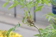 June Birds (3)