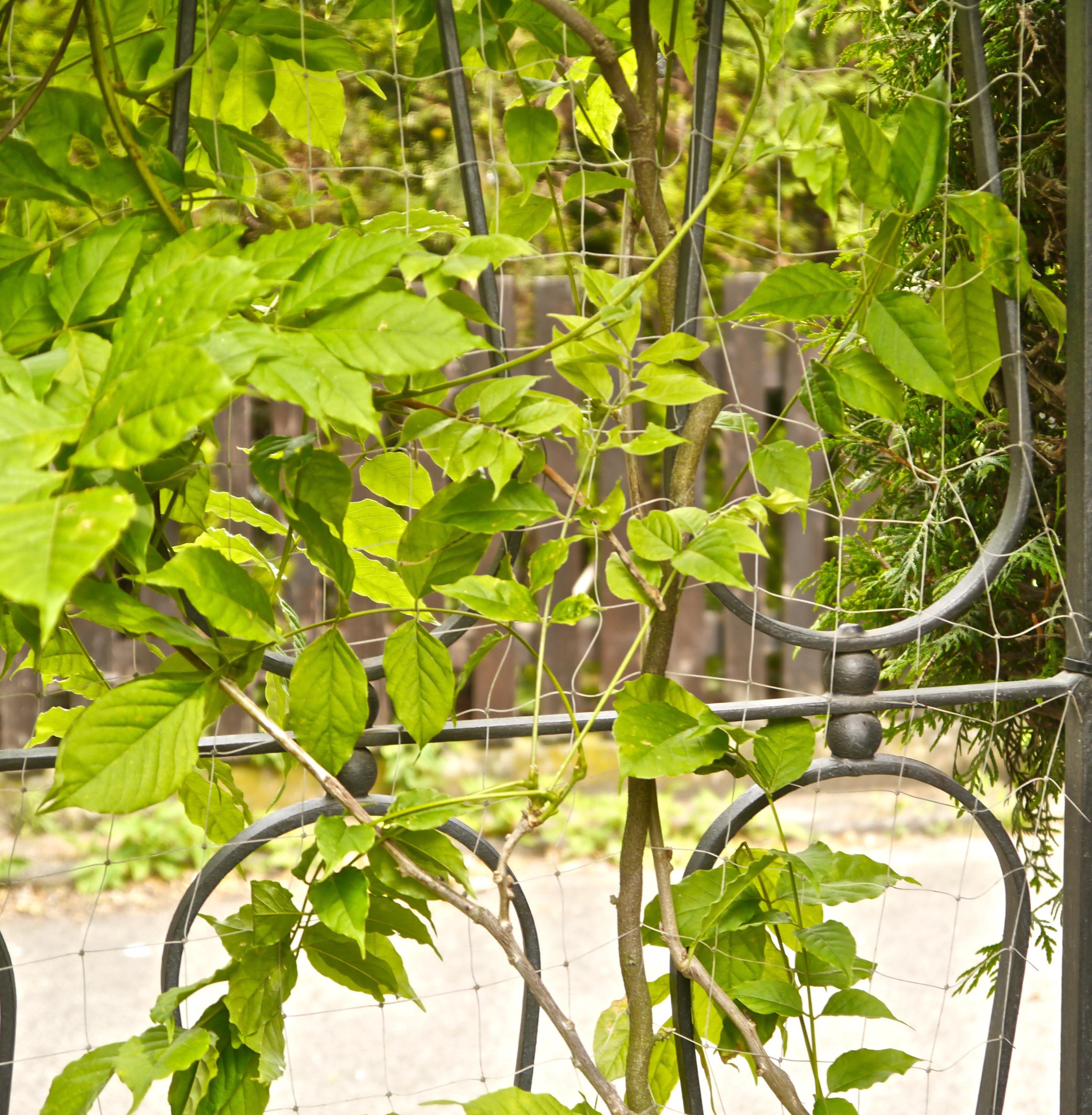 Kleine Gärten In Der Stadt Wie Kann Ich Einen Kleinen Garten