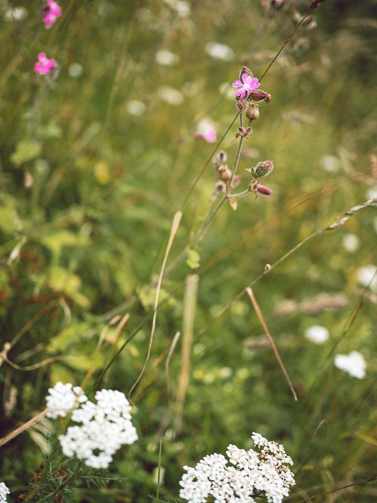 fiori montefalcone