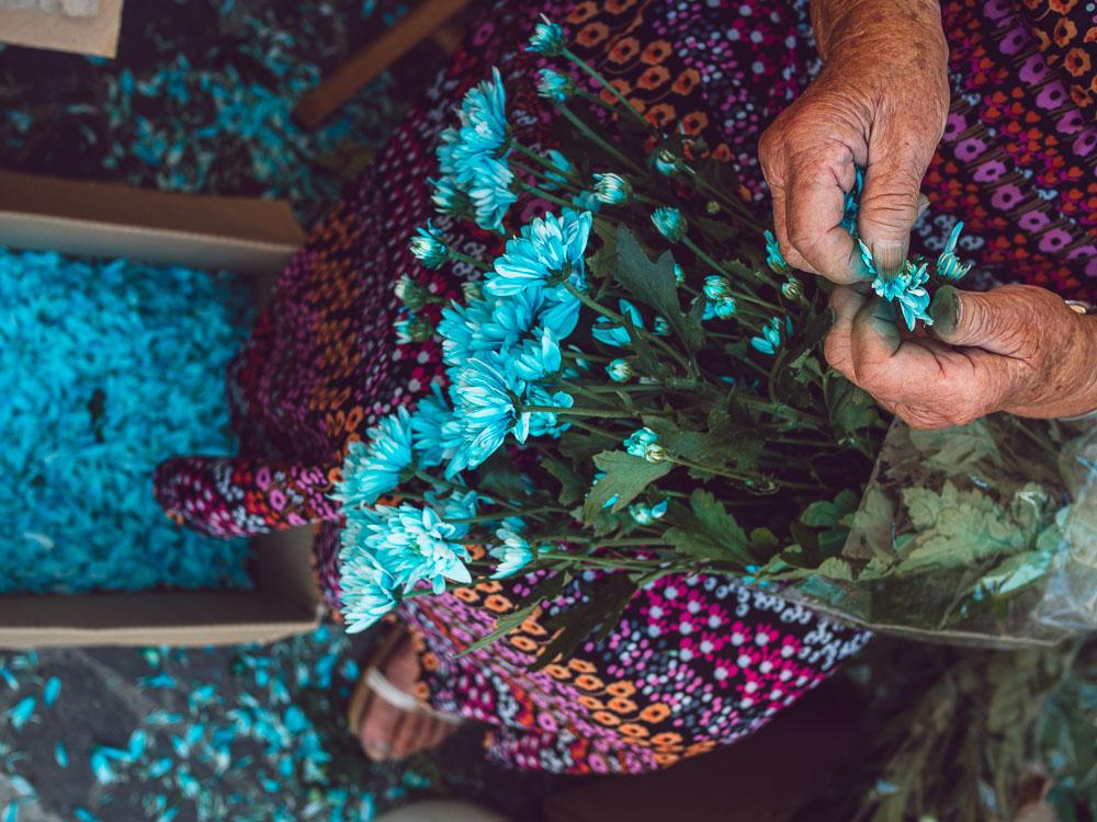 preparing the flowers for the infiorata in bolsena