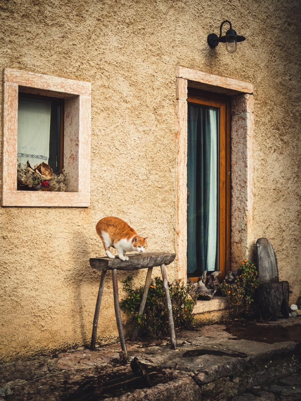 gatto a campofontana