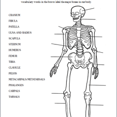 Anatomy And Physiology Diagrams To Label Pioneer Avh 4201nex Jeep Wrangler Skeletal System | Human Body
