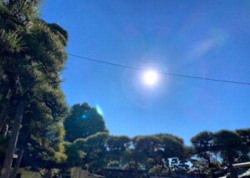 瑞龍松と太陽