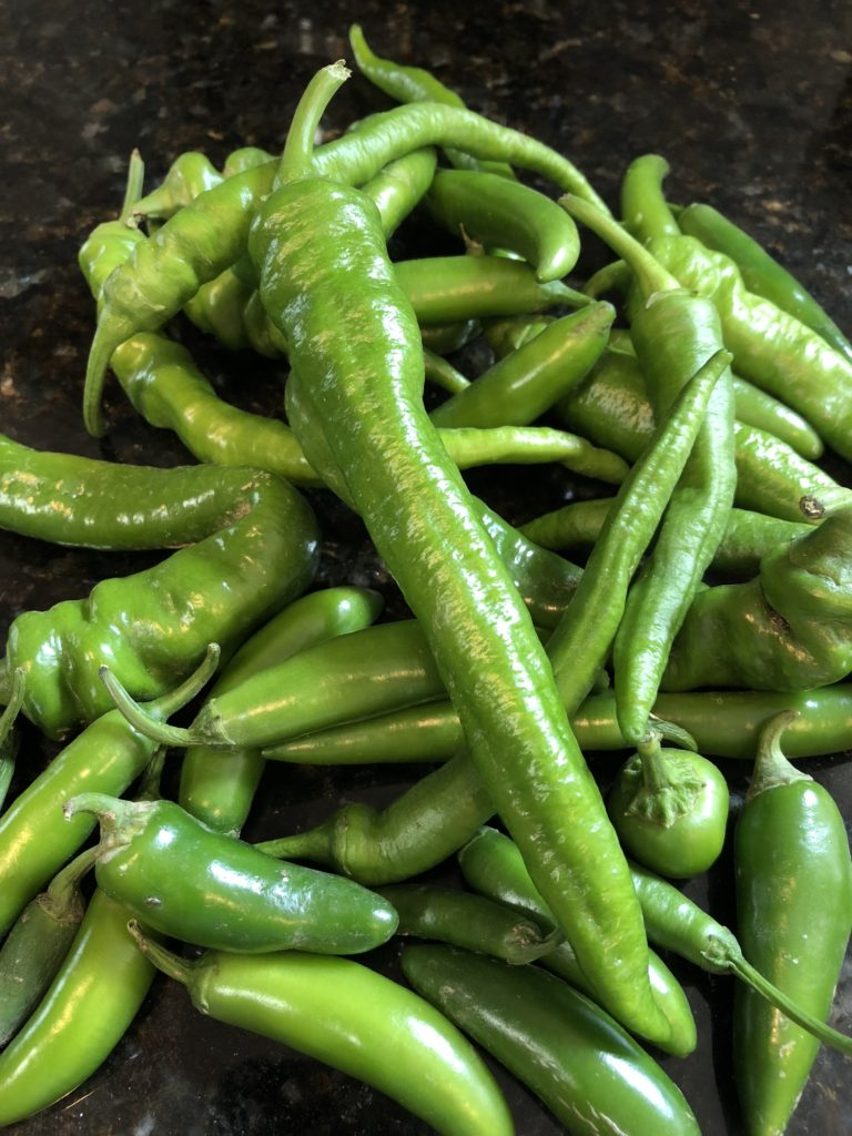 A large pile of jalapenos from my garden.