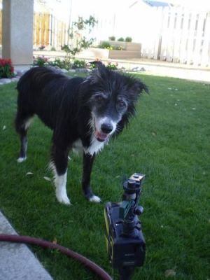 Solar Powered Motion Activated Animal Repellent Garden Sprinkler photo review