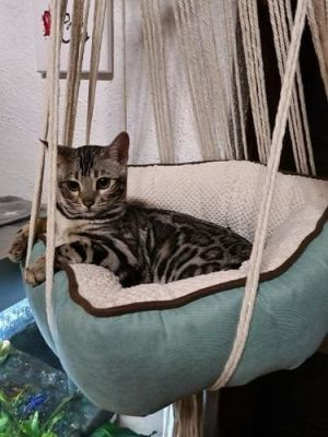 Macrame Cat Swing Bed photo review