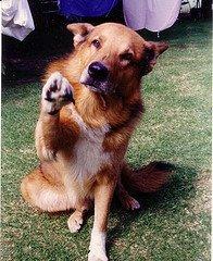 DogPawShake-774327
